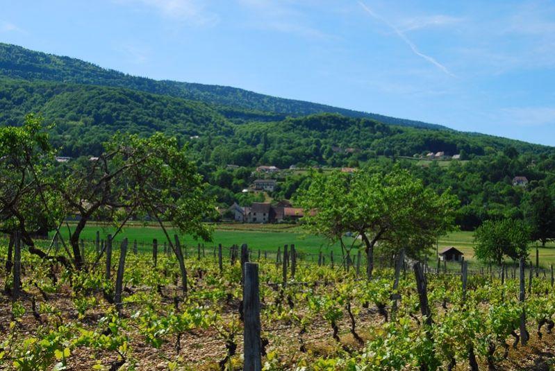 Plateau-Massignieu_799x535